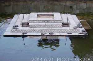 四天王寺に亀参り。