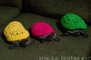 亀のニット帽。
