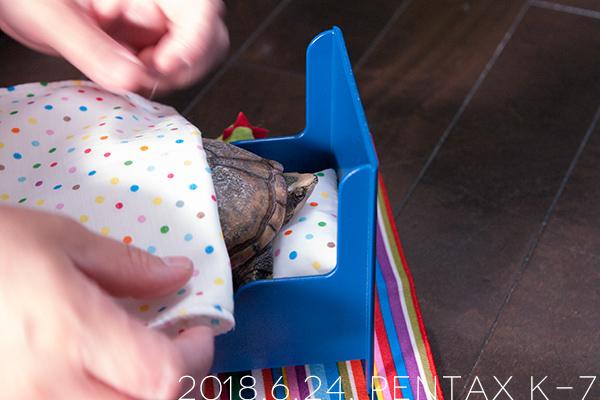 ミシシッピニオイガメの「あずき」